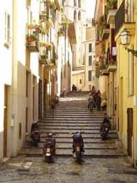 ulica palma
