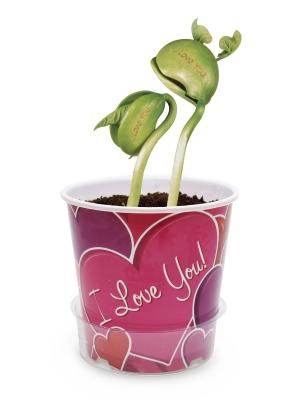 Ljubavna poruka na cveću